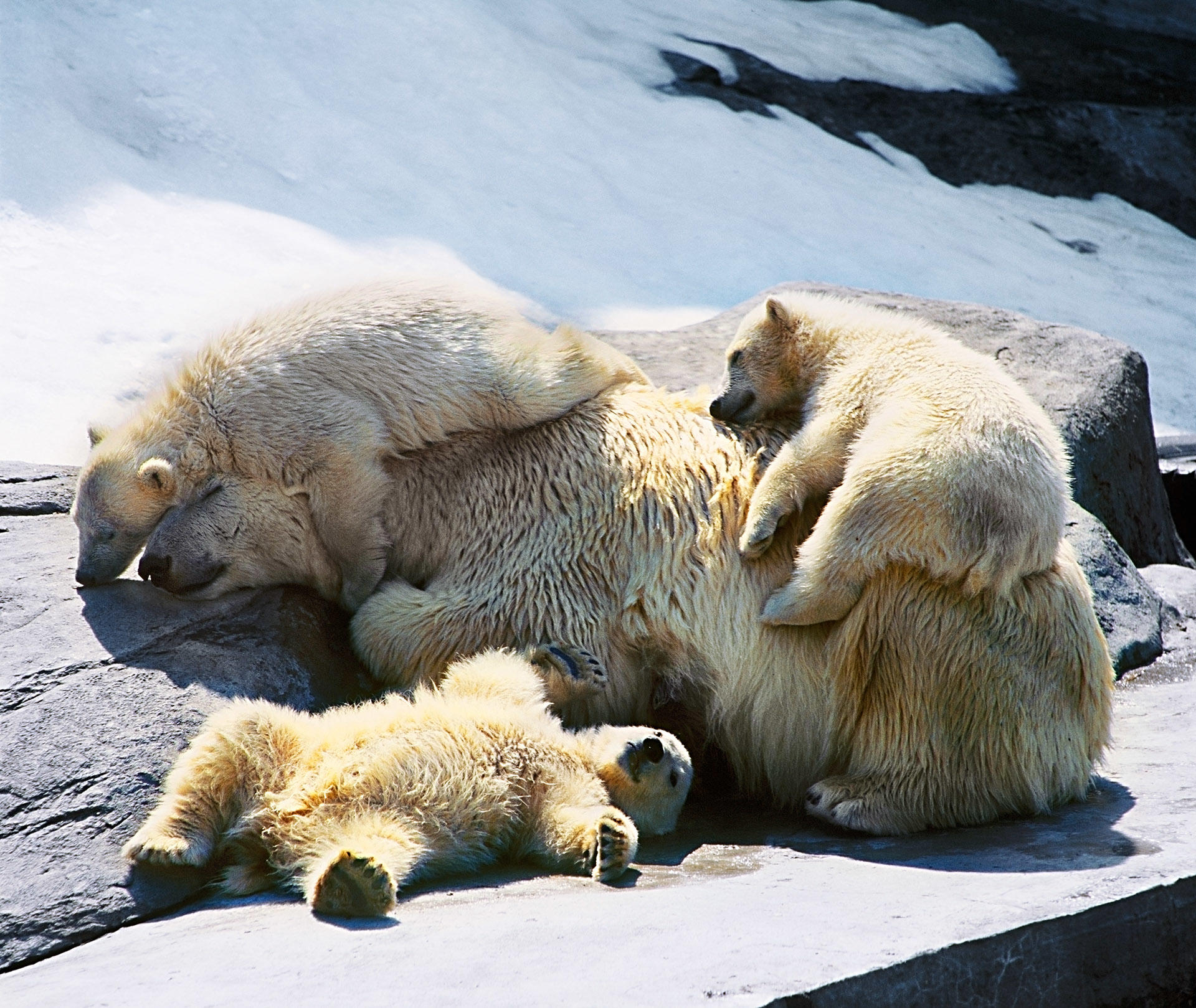 недорогую смешные картинки с медведями которые спят линия застройки